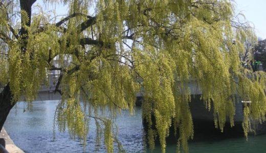 シニアの趣味に川柳はいかが?年々盛り上がるハイレベルなシルバー川柳ガイド