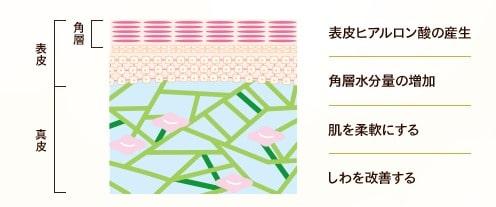 資生堂 アイクリーム2